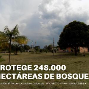 Compensación Voluntaria de Carbono - Proyecto YAAWI IIPANA REDD+