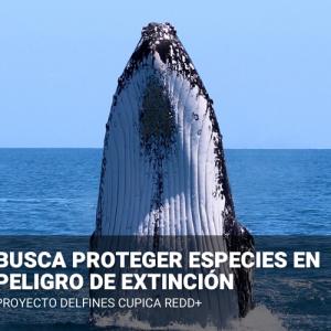 Compensación Voluntaria de Carbono - Proyecto DELFINES CUPICA REDD+