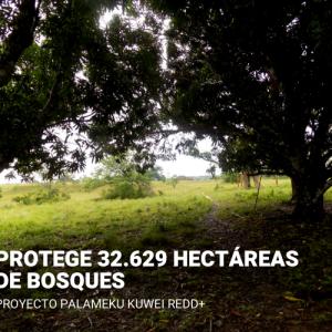 Compensación por impuesto al carbono - Proyecto PALAMEKU KUWEI REDD+